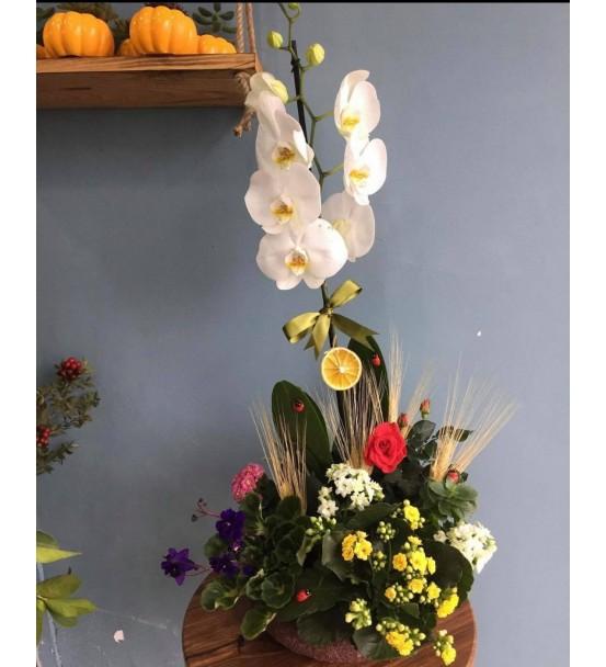 Butik Orkide Aranjmanı 2