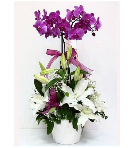 Mor orkide aranjmanı