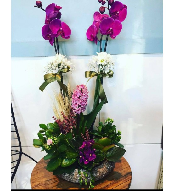 Butik Orkide Aranjmanı